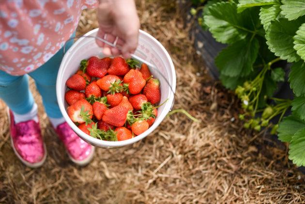 fun spring photo strawberries